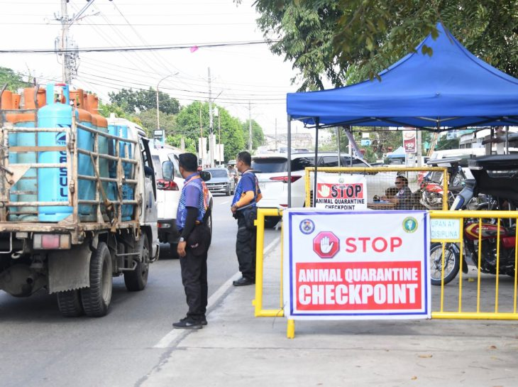 City vet sets up checkpoints to help contain African swine fever in Pangasinan